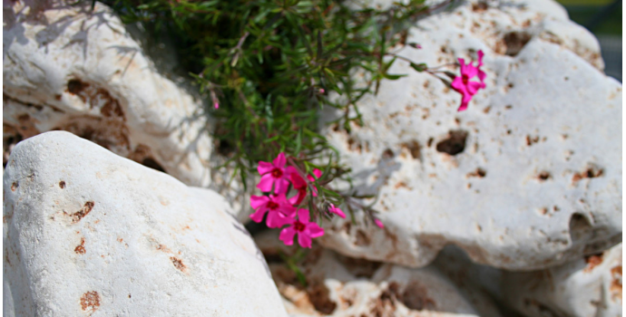 Kamienie ogrodowe i dekoracyjne